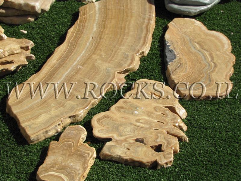 עץ מאובן, עצים מאובנים