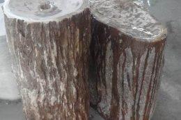 עצים מאובנים