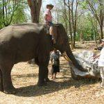 סלעים המגיעים באמצעות פילים…