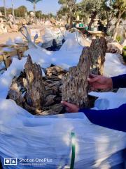 פריקת מכולות סלעי דרקון בכפר הסלעים