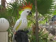 ציפור יצוקה
