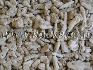 אלמוגים קטנים